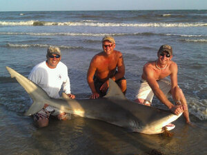 Damian Diaz, from left, James Sparks and Justin Lyons pose with an 8-foot bull shark caught Sunday, July 3, 2011 on Bolivar Peninsula beach. The 300-pound shark caught by Diaz and his family was released back into the Gulf after the group snapped a few photos to commemorate the catch.