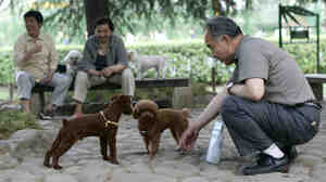 Officials in Jiangmen, China, have cancelled a ban on dogs in urban areas. Here, a man pl