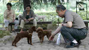 Pet Owners Win: Chinese City Relents On Dog Ban