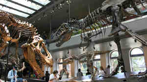 About 300 dinosaur specimens are on display at the Dinosaur Hall at the Natural History  Museum of Los Angeles.