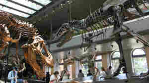 Dinosaur Hall Roars To Life