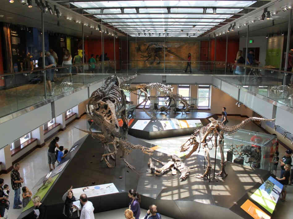 Most of the skeletons at the Dinosaur Hall are real. The exhibit's curator even collected some of them himself.