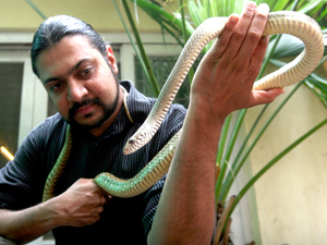 Kartick Satyanarayan, of the animal rescue group Wildlife SOS, holds a rat snake. The group says it is trying to retrain traditional snake charmers and use their skills to remove dangerous snakes from populated areas where they threaten people.
