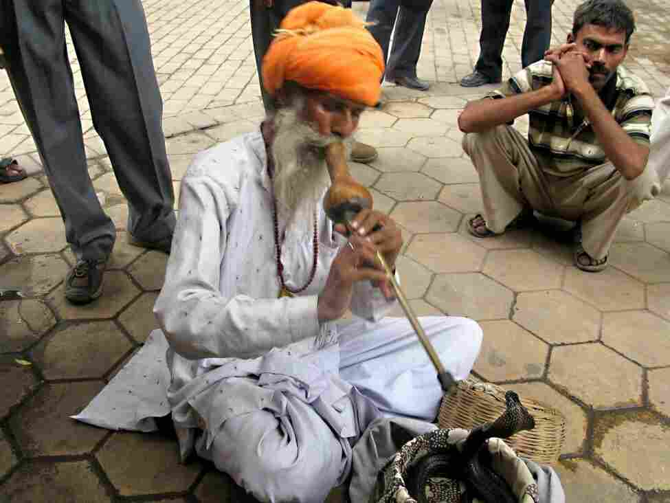 Snake charming is a dying art in India. Here, a man named Buddhanath is shown at a New Delhi market during Nag Panchami, the yearly religious festival in honor of the king cobra. The charmer plays a gourd flute and his snake responds.