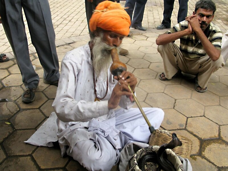 In India, Snake Charmers Are Losing Their Sway : NPR