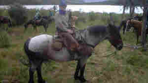Neal Conan atop XL, a cross between a draft horse and a Morgan. He rode XL for two days, and Bruce the other three.