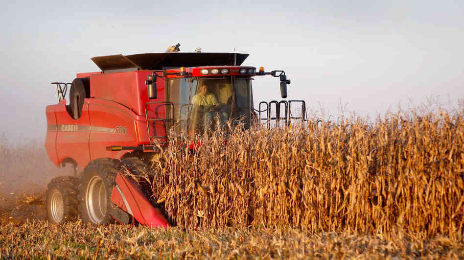 Joe Raben harvests corn on land he farms with his father and uncle Oct. 4, 2008, near Carmi, Ill. Some farmers say technological improvements and farming mechanization, not subsidies, are responsible for increased output.