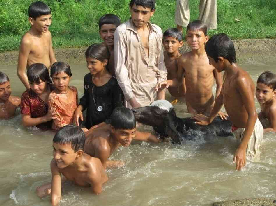 Children swim in the canals in rural Pakistan with  their livestock. According to a new government survey, Pakistan is producing nearly 4 million babies every year, and most are born into poverty.