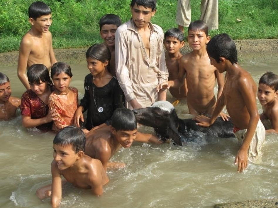 Children swim in the canals in rural Pakistan with  their livestock. According to a new government survey, Pakistan is producing nearly 4 million babies every year, and most are born into poverty. (for NPR)