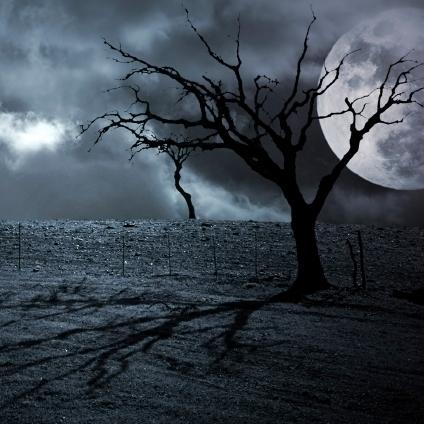 A spooky tree.