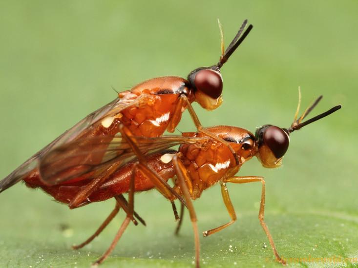 Ant sex
