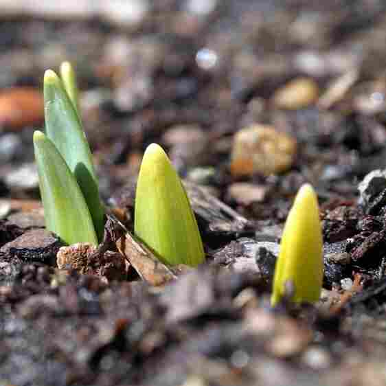 A bulb sprouts.