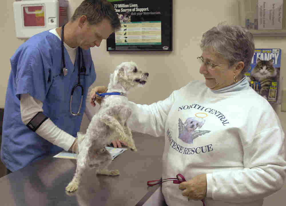 Mary Palmer brings Max in for a checkup at Belle City Veterinary Hospital in Racine, Wis., on Oct. 29, 2008. Max was stolen from his yard in Florida and turned up several months later in Chicago.