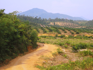 Palm oil plantations cover the hills of western Borneo, where the world's oldest rainforests once stood.