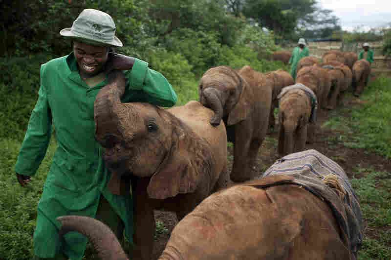 "Elephant orphans form intense bonds with their caregivers and vice versa. ""It's not for the wages,"" explains one veteran keeper. ""The more you're with them, the more you satisfy yourself. You just love them."""