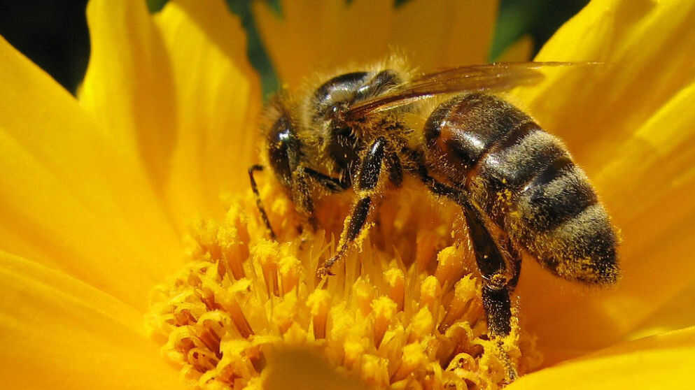 The Bee's Knees: Music With A Definite Buzz