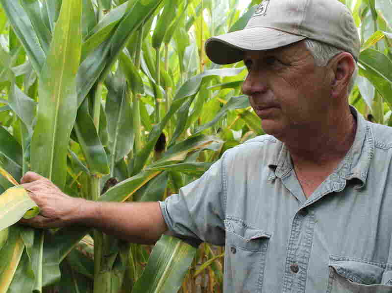 Corn grower Vernon Flinn is hoping for rain to boost his yields this year. Corn prices have doubled since last summer, and farmers are gunning for bushels as high per acre as possible.