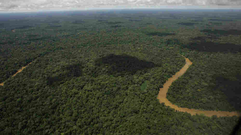 Get down there and start counting. (An aerial view of the Yasuni National Park, in Ecuador's northeastern jungle. Thursday, May 17, 2007.)