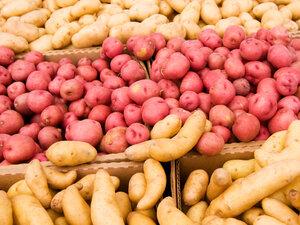 An assortment of potatoes.