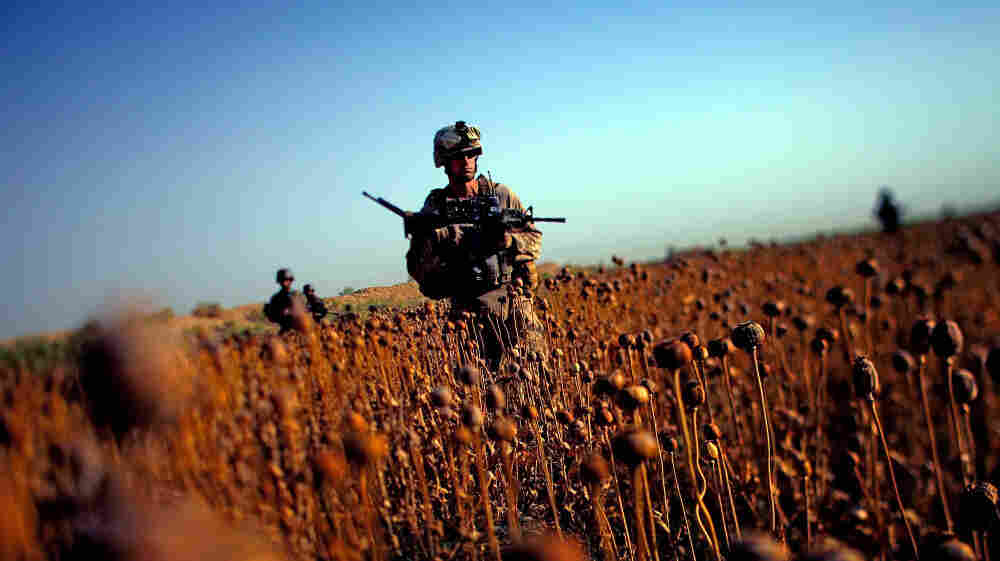 U.S. Marines patrol with Afghan forces  through a harvested poppy field in Northern Marjah in southern Afghanistan's Helmand province, June 6, 2011. Ten years after the fall of the Taliban, progress on U.S. pledges to help Afghanistan is mixed.