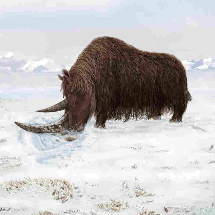 An Ice Age Beast Evolved To Beat The Cold