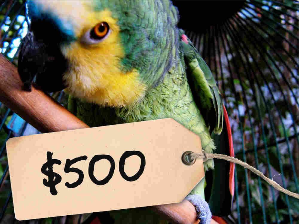 $500 parrot