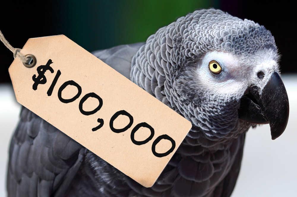 $100,000 parrot