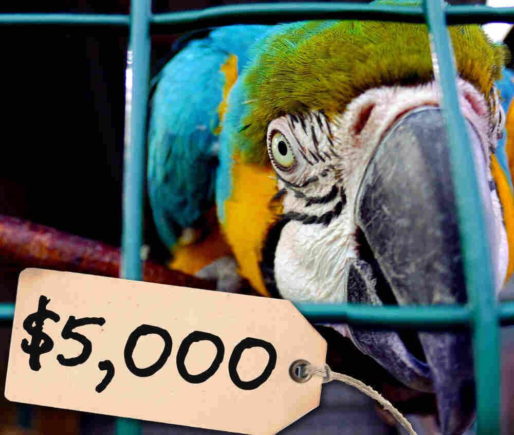 $5,000 parrot
