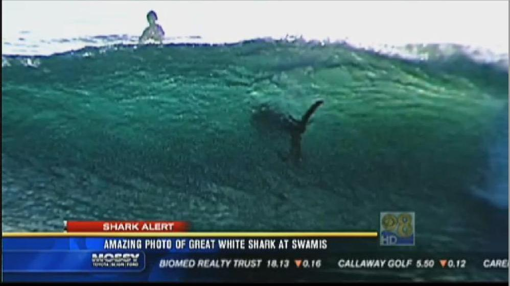 Shark Or Surfer Photo Taken Near San Diego Gets Attention The Two Way Npr