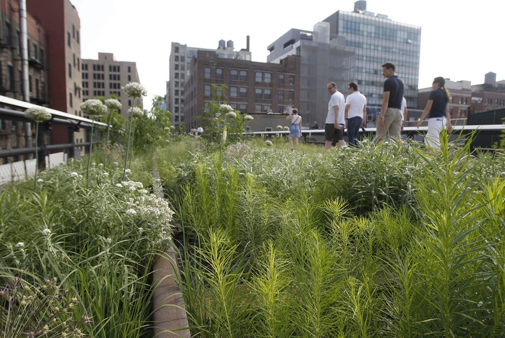 The High Line's second section stretches from West 20th Street to West 30th Street and is home to the park's Wildflower Field and Woodland Flyover.