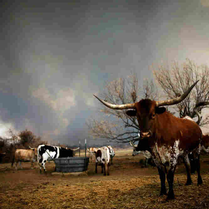High Winds Whip Up Texas Wildfires