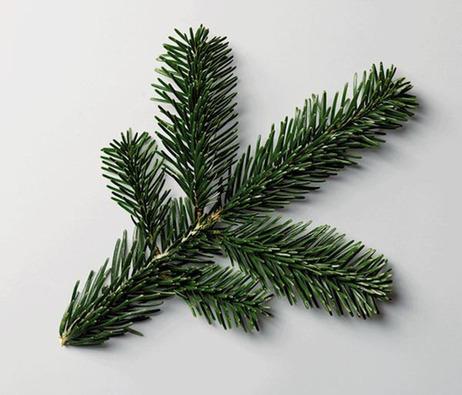 Ursus Wehrli pine