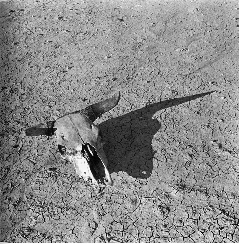 Overgrazed Land. Pennington County, South Dakota (1936) is one of several photographs Arthur Rothstein took to document dry, sun-baked earth of the South Dakota  Badlands.