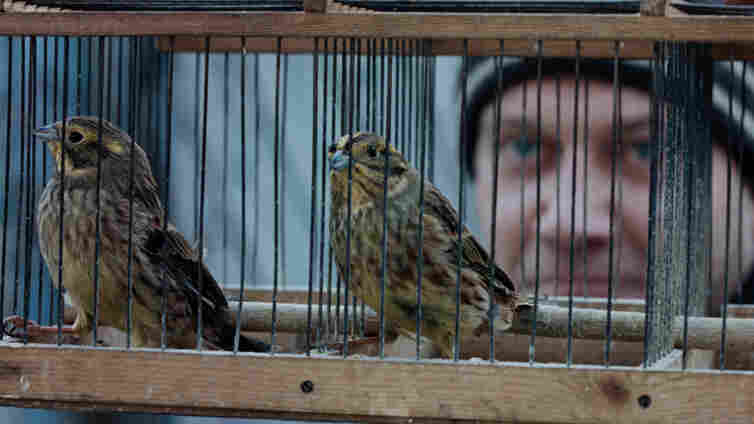Endangered species: Mill-worker Aist (Igor Sergeyev) travels thousands of miles across Russia with a coworker (and two caged birds) to bid farewell to his friend's late wife, according to the rituals of a vanishing culture.