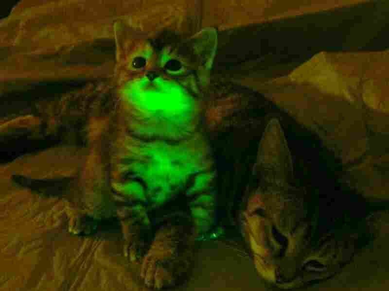 Glow in the dark cat