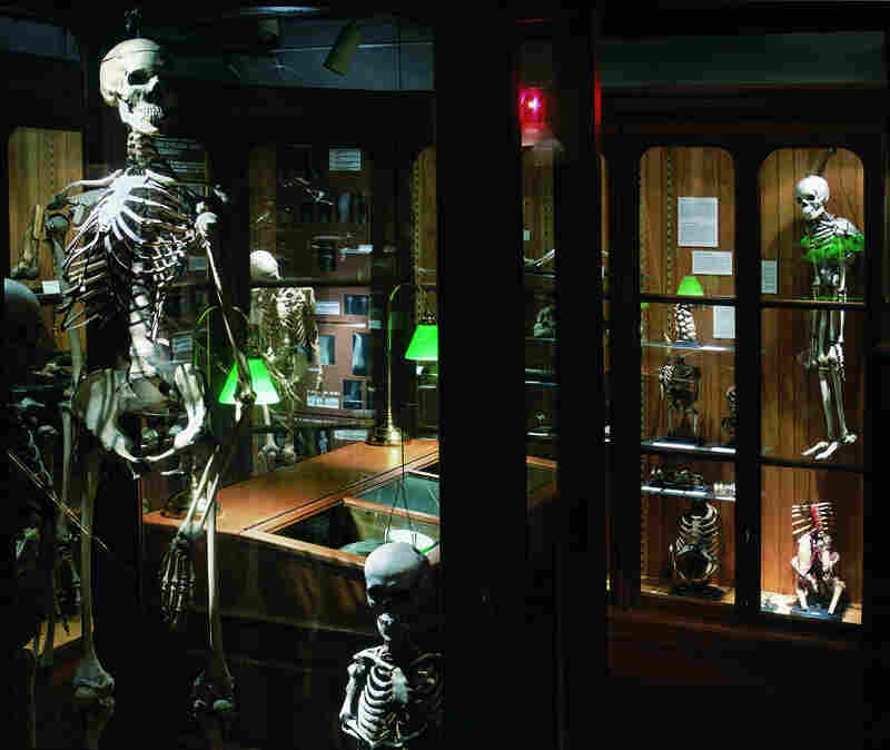 The bone pathology section of the Mutter Museum shows, in the foreground, the skeleton of a 7-foot-6-inch giant and the skeleton of Mary Ashberry, a 3-foot-6-inch dwarf.