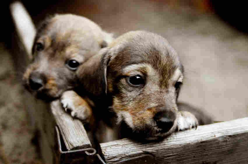 Cute puppies!