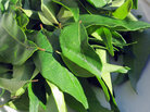 Choose curry leaves that are bright, dark green without signs of browning or bruising.