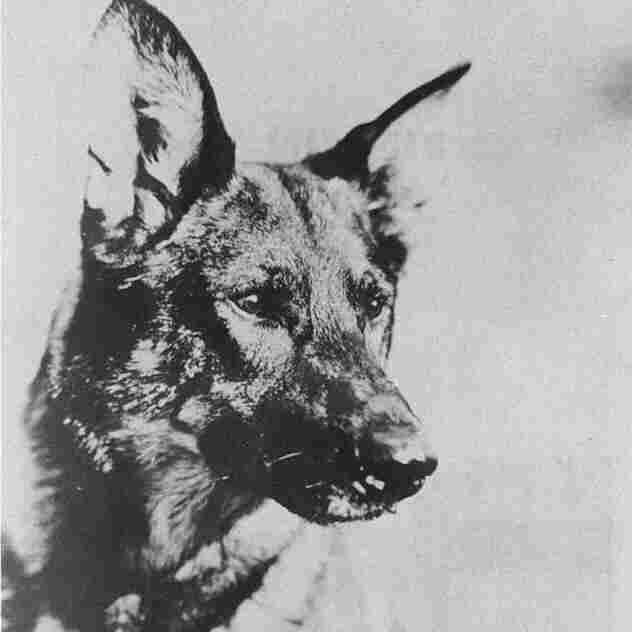 The original Rin Tin Tin was born in 1918 and died in 1932.