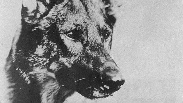 The original Rin Tin Tin was born in 1918 and died in 1932. (Courtesy of Simon and Schuster)