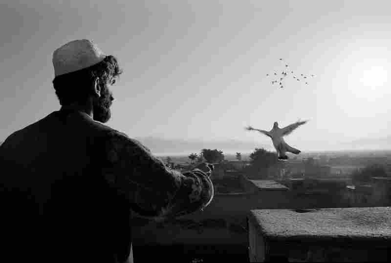 Agha Reza releases pigeons, Parwan Province, 2001.