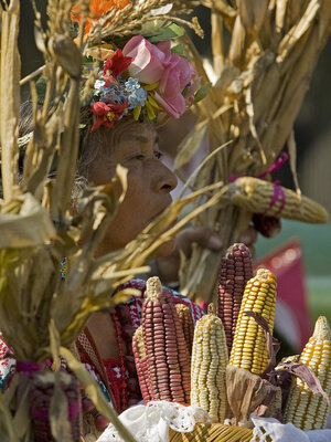 Scientists unlock another piece of the puzzle about the evolution of corn.
