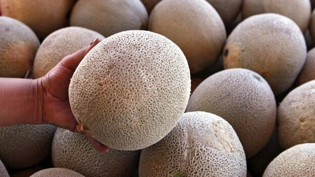 Worker holds up a cantaloupe for sale