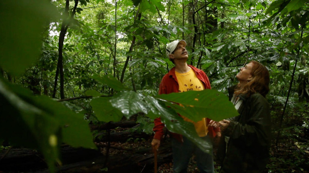 The Pawpaw: Foraging For America's Forgotten Fruit : The