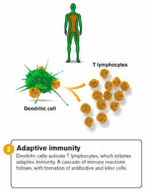 An illustration of adaptive immunity.