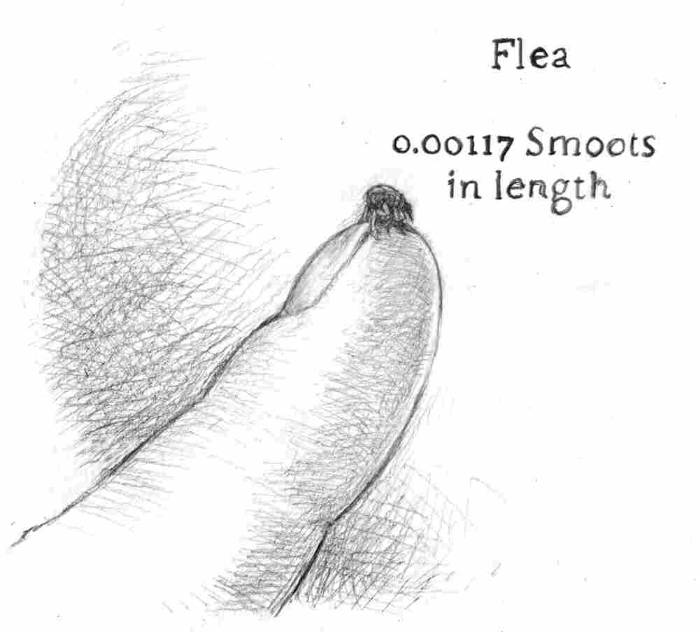 A flea is 0.00117 smoots in length.
