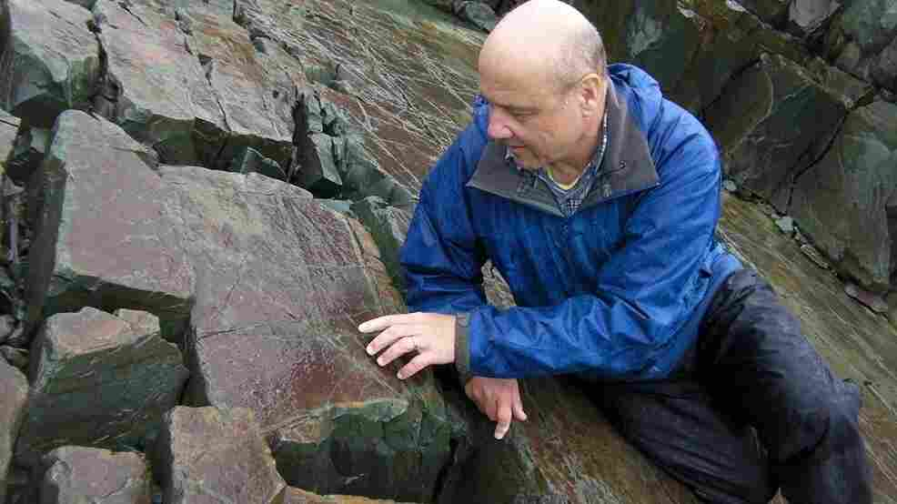 Guy Narbonne, a paleontologist at Queen's University in Ontario, inspects a fossil at the Mistaken Point Ecological Reserve in Newfoundland. It is filled with half-a-billion-year-old treasures like this one.