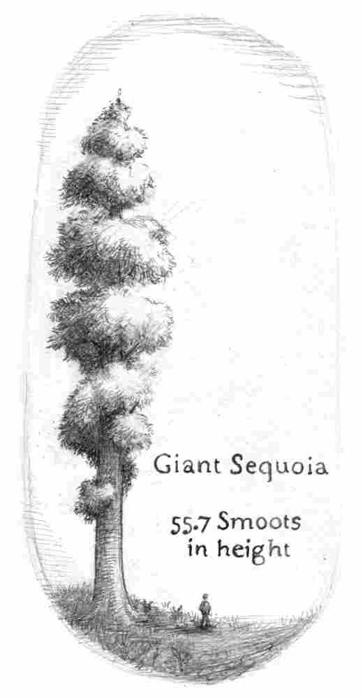 Giant Sequoias are 55.7 smoots heigh.