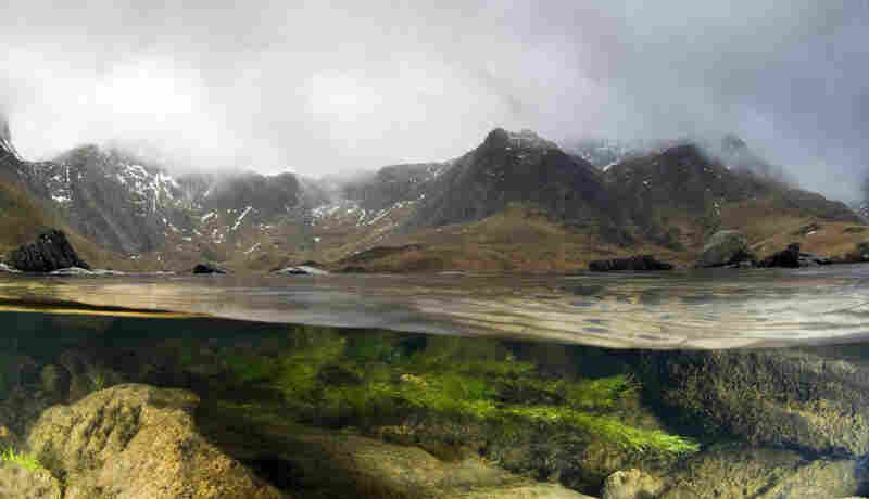 A split-level image of a lake in the mountains of Snowdonia, Wales, showing the habitat on both sides of the surface.