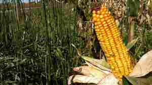 Why 158 Acres Of Corn Costs $1.5 Million